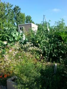Garden2 July 2014
